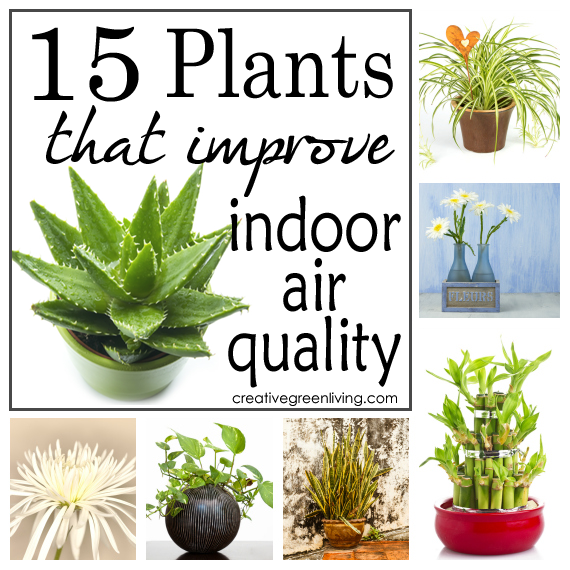 Did You Know That Specific Kinds Of Plants Can Improve The Quality Air In Your Home