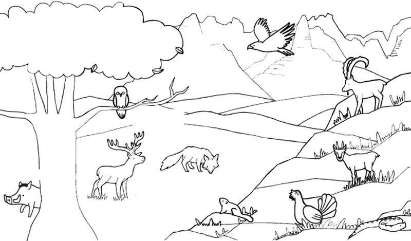 Animales De La Montana Dibujo Para Colorear E Imprimir Paisaje Para Colorear Dibujos Para Colorear Paisajes Dibujos Para Colorear