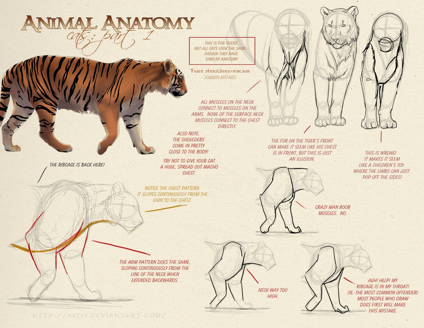 Animal Anatomy Cats Part 1 By Akeli Anatomie Pinterest