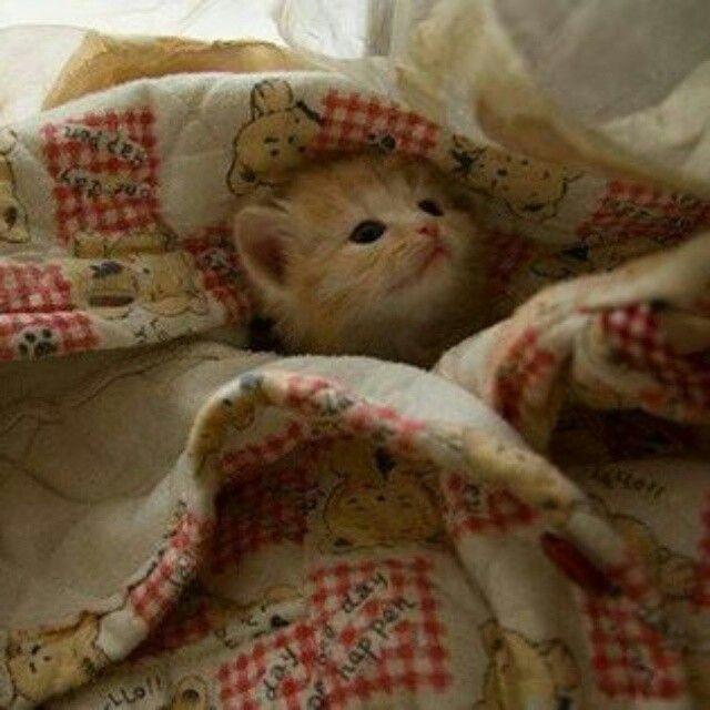 Visto che è tornato il freddo, io dormo al calduccio ♡ Dolci Sogni a-mici…