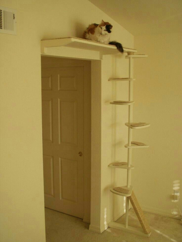 Cat Stairs And Above Door Perch