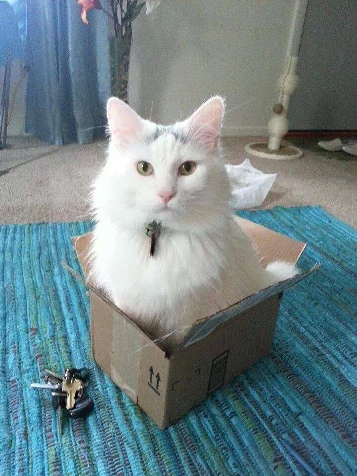 A box is a box!?.... Katzen, Hunde, Karton