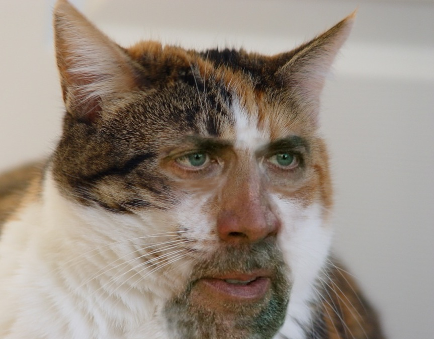 Image result for cat face human