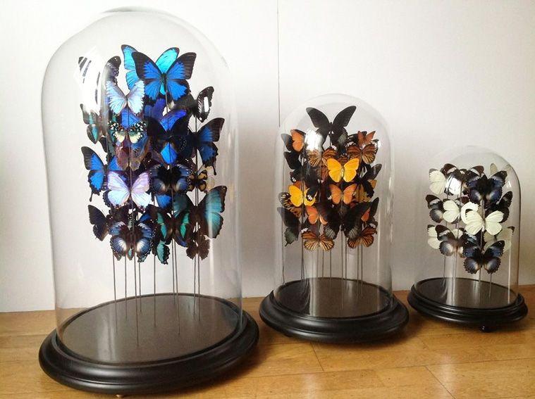 Papillons sous cloche cabinet de curiosite pinterest cloche papillon et cabinet de curiosit - Globe cabinet de curiosite ...