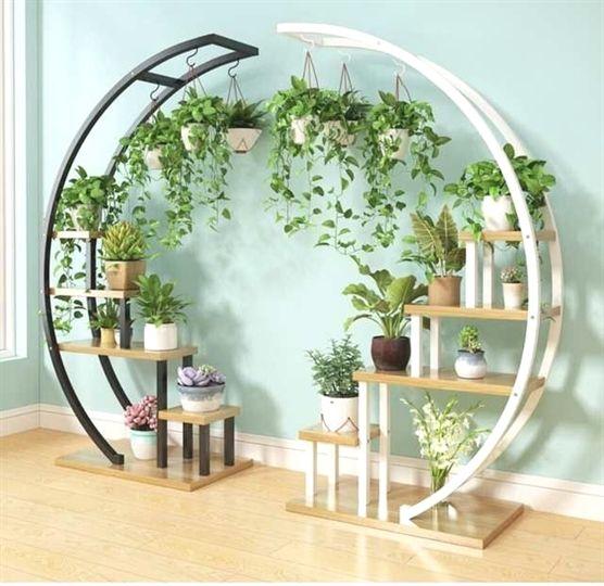 Nursery Indoor Plants Near Me: Plants For Bedroom, Plants Moving Towards Sunlight, Indoor
