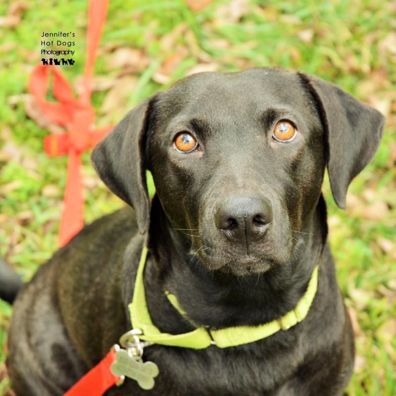 Adopt Tess on Big fluffy dogs, Big fluffy dog rescue