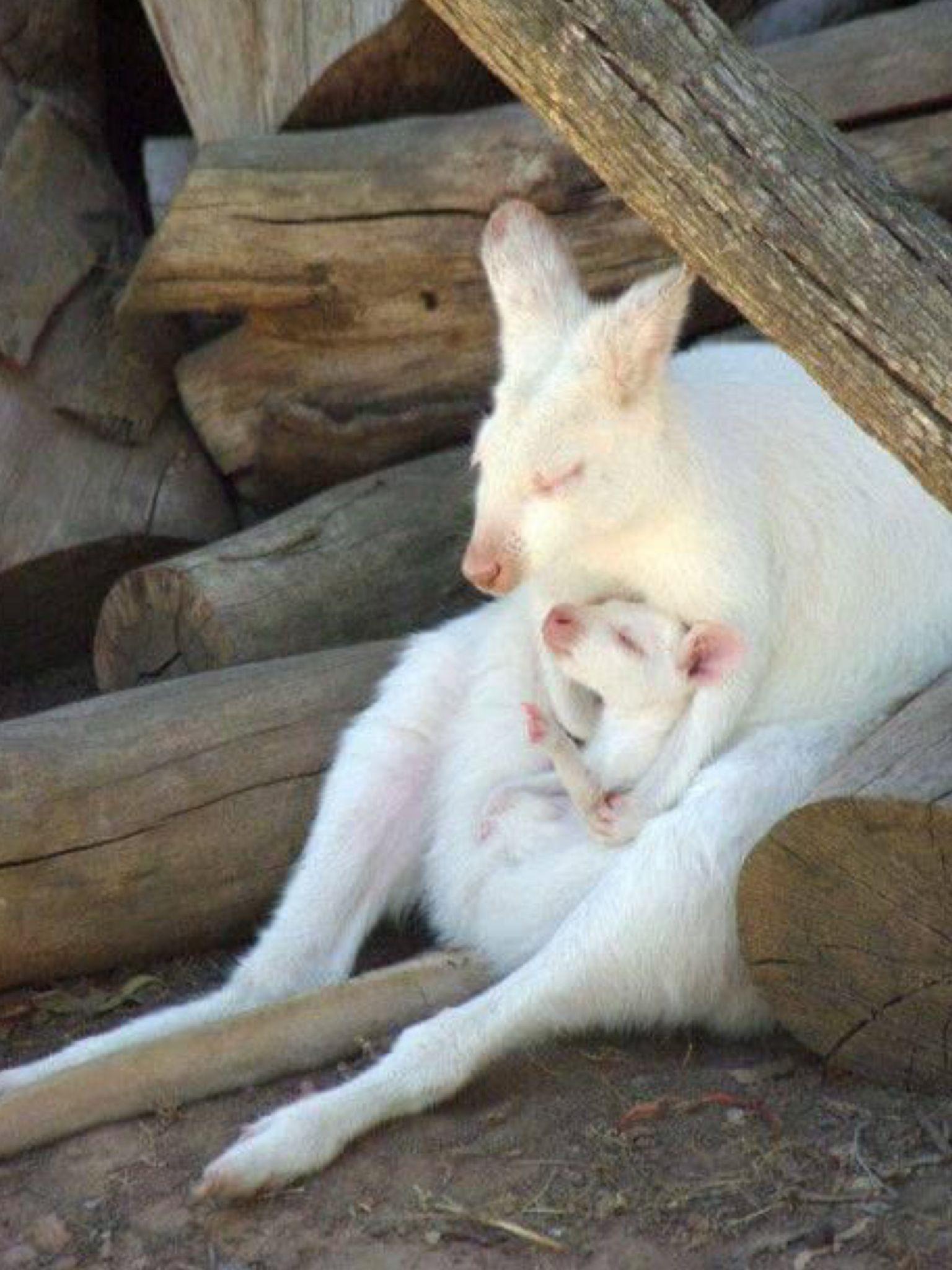 ANIMALS Albino animals, Rare albino animals, Rare animals
