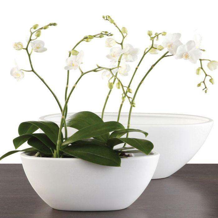 tipps zur orchidee pflege - wie überdauert die orchidee länger, Haus garten