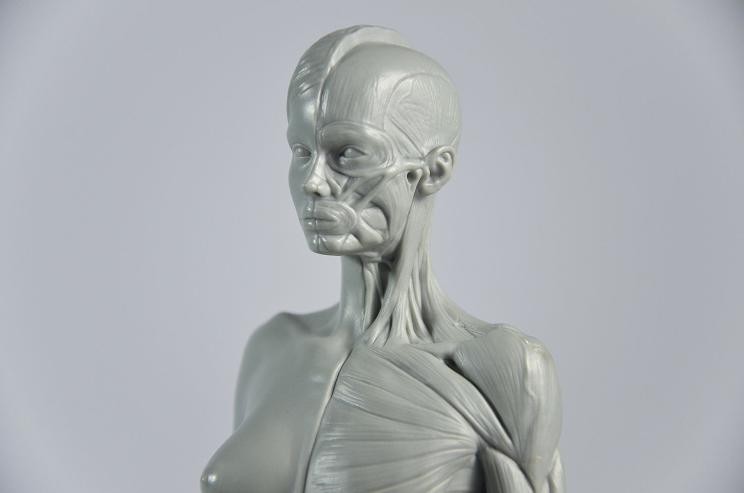 3D Total Female Anatomy Figure | CG Everything | Anatomy - Heads and ...