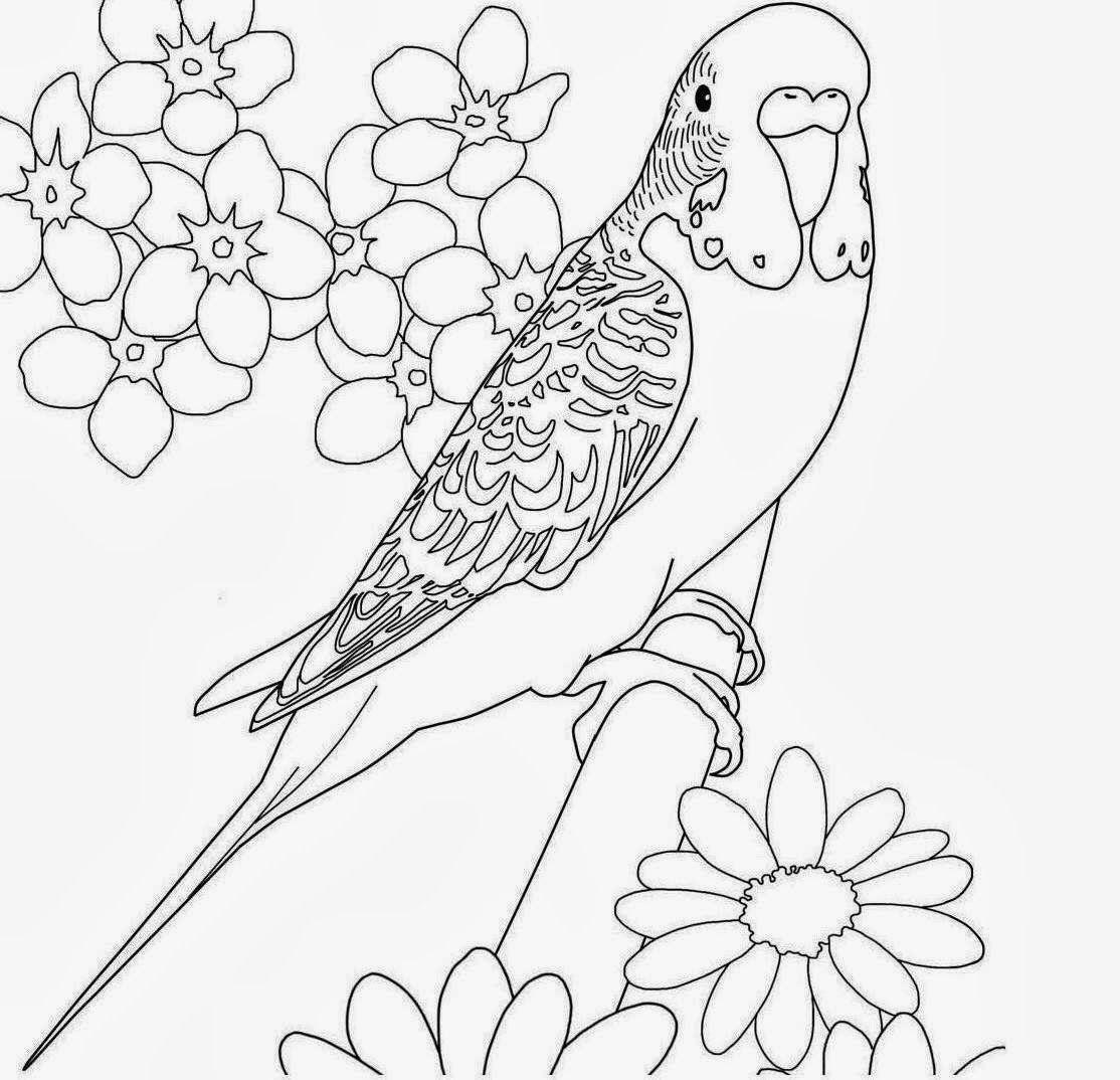 Bird Colour In Google Search Outlines Bird Coloring
