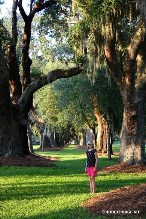 Avenue Of Oaks Chalk Art Tutorial With Images Us Islands St Simons Island Historical Sites