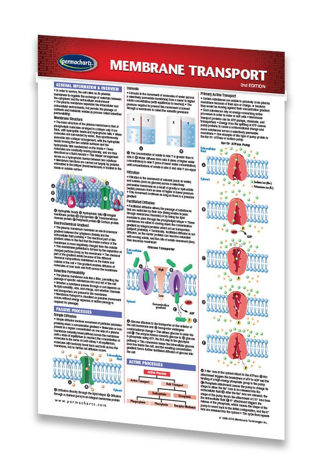 B For Biology Cell Membrane Manual Guide
