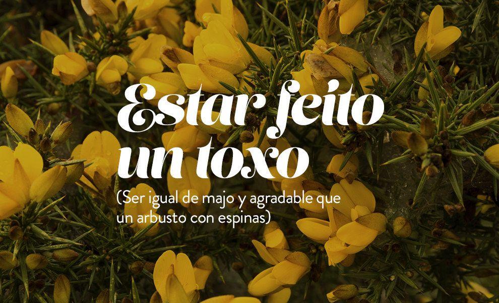 18 Frases Gallegas Que El Resto De España Necesita Aprender Frases Frases Geniales Frases De Mentalidad