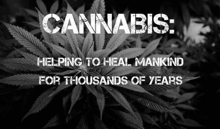 cannabis info facts truths