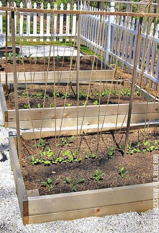 A Trellis for Growing Peas Growing peas, Pea trellis