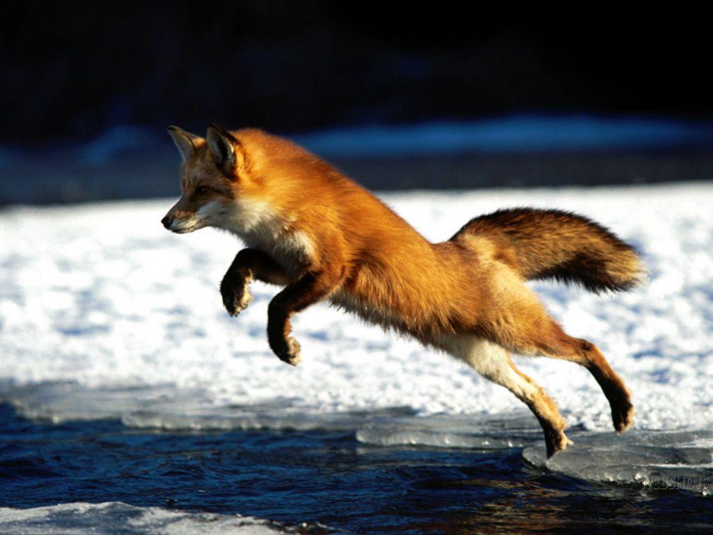 Pin On Fox My Teacher