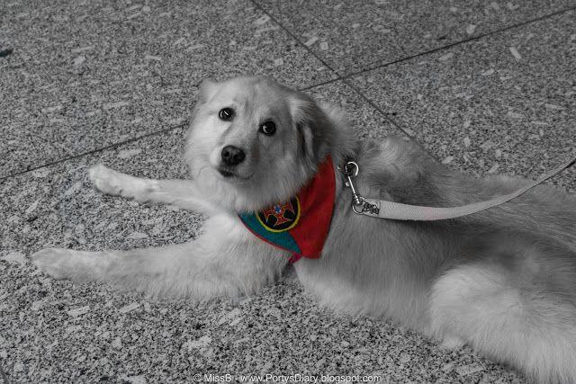 Porty's Diary: 52 Week Photo Challenge Week 20/52 #dog #supporter #Sonya6000 #sonyalpha #mirrorless