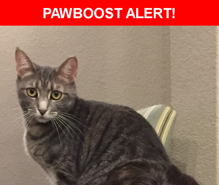 Please spread the word! Cleo was last seen in Cedar Park, TX 78613.  Description: she is sweet and should let you hold her she has never been outside before and will probably be really scared she is neutered