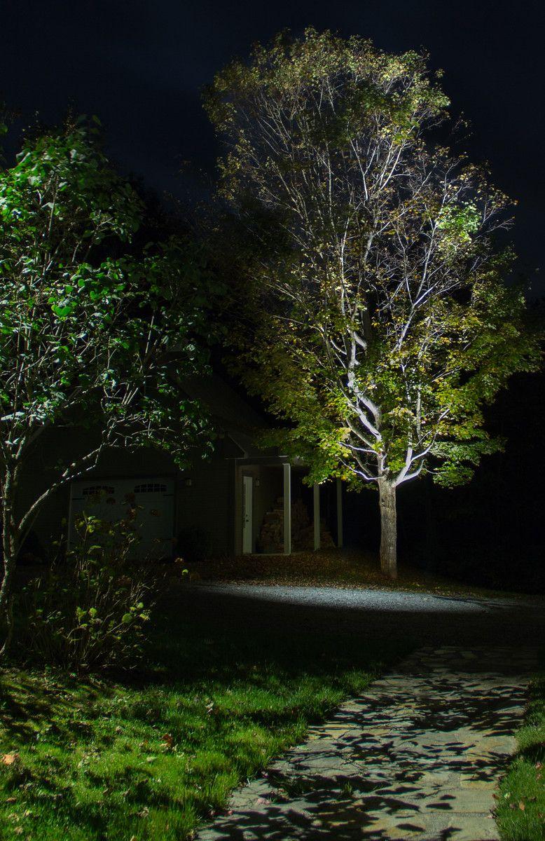 Nicely Lit Automn Maple Eclairage D Un Bel Erable En Automne Eclairage De Jardin Eclairage Exterieur Paysagiste