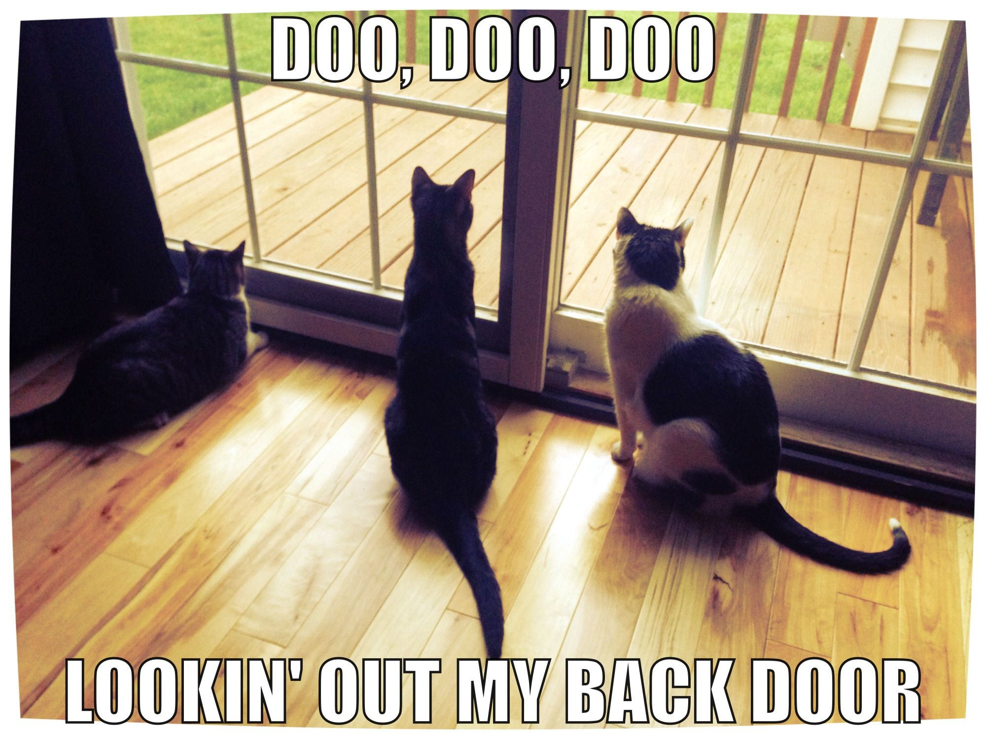 Lock the front door, oh boy! | Furry Friends | Pinterest