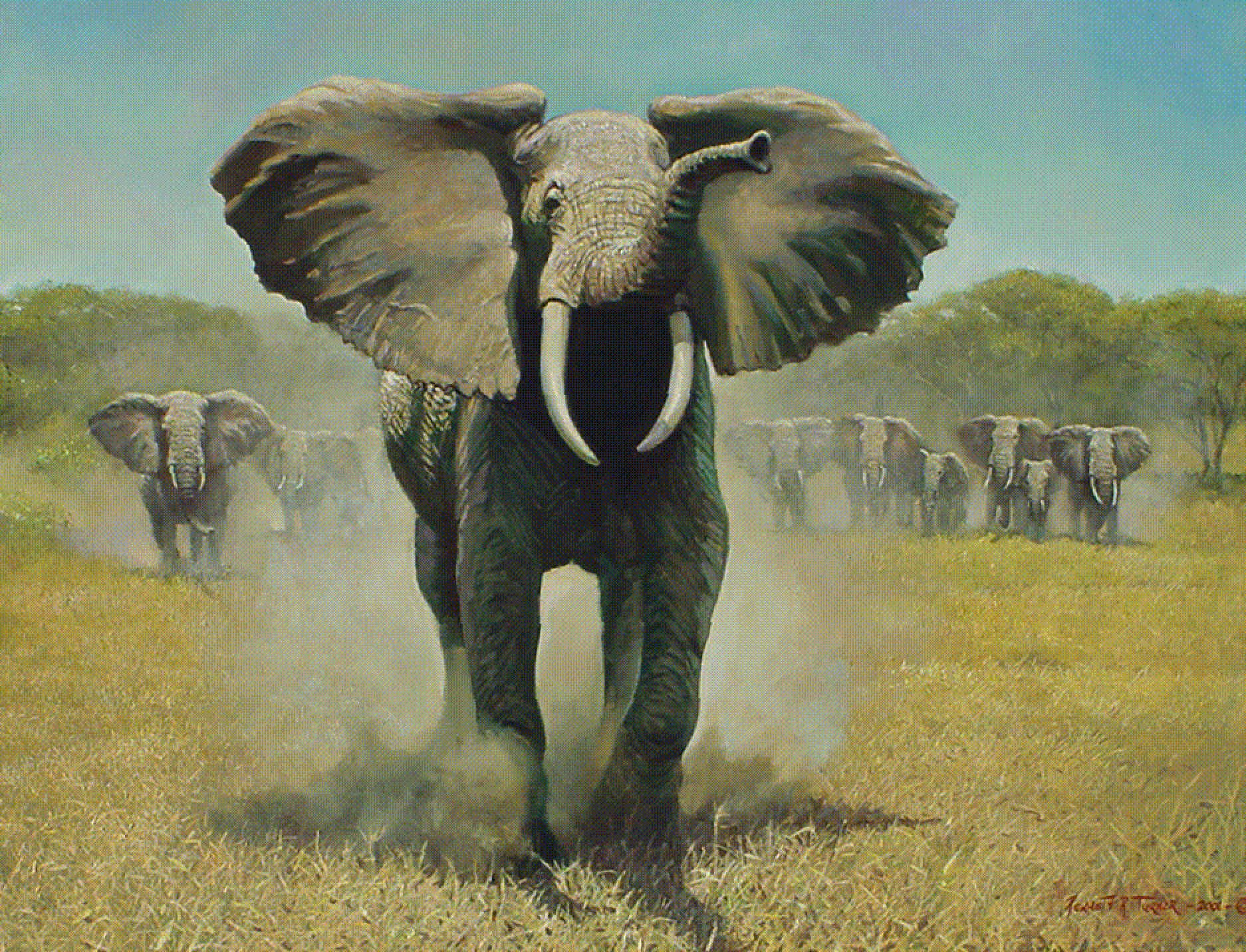Dowload For Laptop Elephant Hd Wallpaper Anime 63292 High Elephant Pictures Elephant Love Cute Baby Elephant