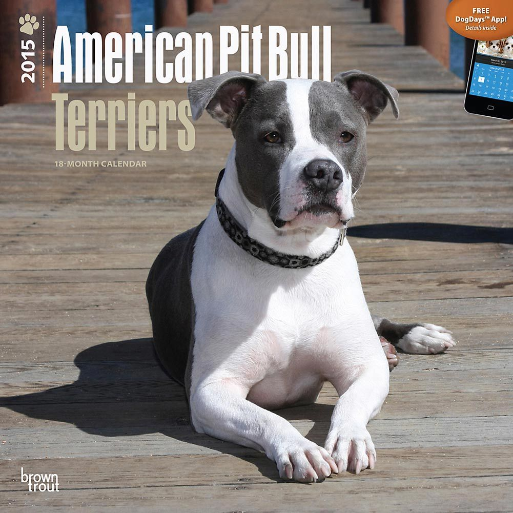 Pit Bull 2015 desk and wall calendars ~ many styles available at http://www.doggiechecks.com/calendars/Pit-Bull.php ~ the perfect inexpensive gift for any pit bull lover. Make 2015 the year of the pit!