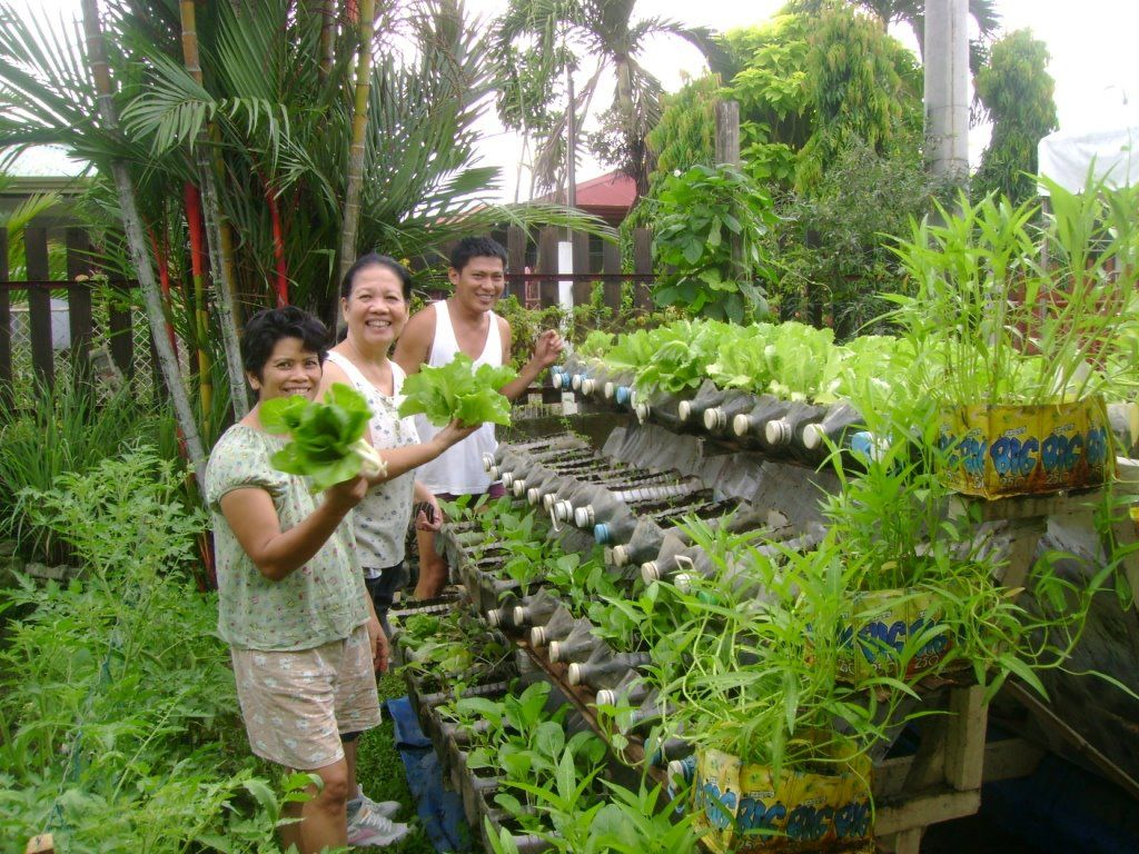 CAN FOOD CROPS BE GROWN SAFELY IN PLASTIC CONTAINERS Willem Van Cotthem