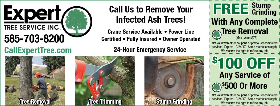 Get a free stump grinding with any complete tree removal