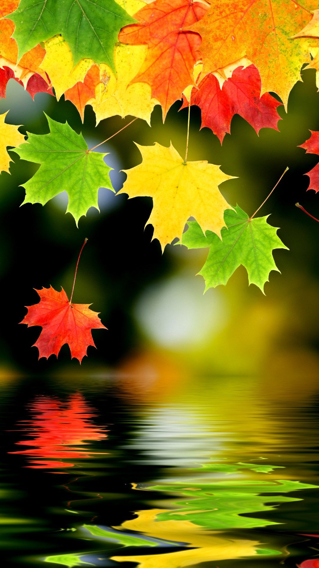 Nature Leaves And Lake Colorful Autumn Fall Melancholy HD IPhone 6 Plus Wallpaper
