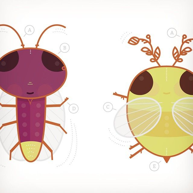 insect specimens. bug collection. childrens illustration. // via @heirloomink