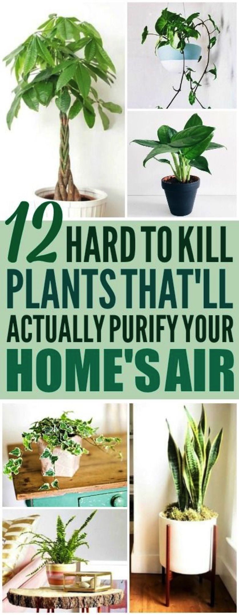 Photo of 12 Amazing Looking Air Purifying Plants You Need in Your Home