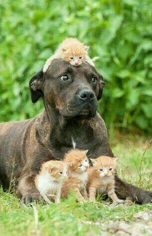 Kitten Bunch and Big Dane