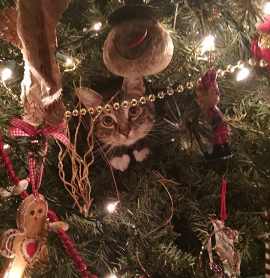 They saw the Christmas tree wiggling, then saw this. #cute #cat #xmas #christmas #tree