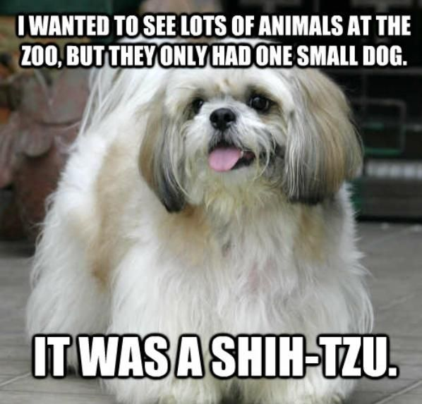 14 Dog Puns That Are So Corny They Ll Give You A Serious Case Of The Giggles Dog Puns Dog Jokes Animal Puns Funny