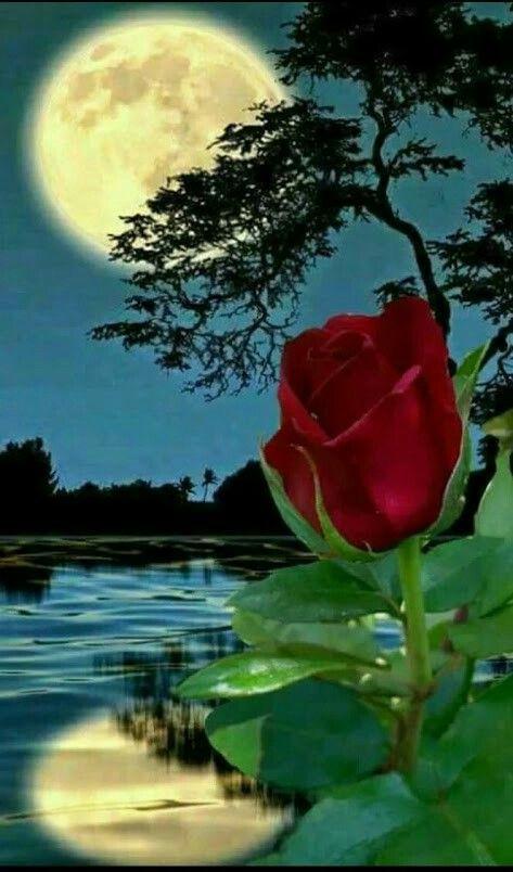 mariposa luz de la luna