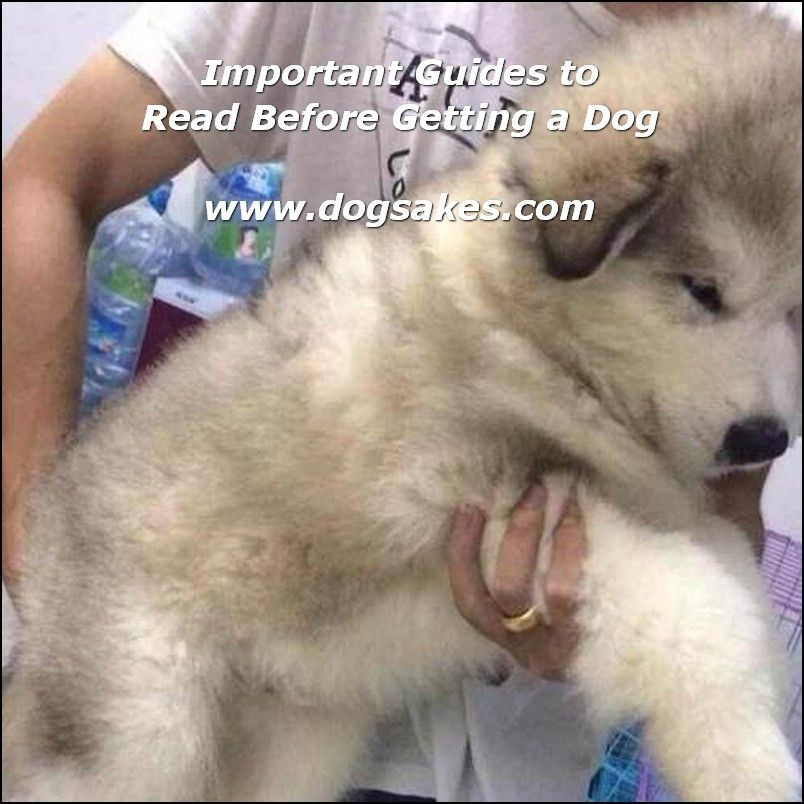 Info's : Buying Puppy Ultimate Guides - Dog Sakes