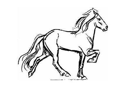 Icelandic Horse Tattoo