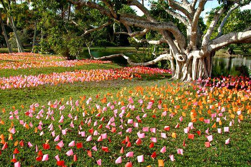 Fairchild Tropical Botanic Garden Serves As A Beautiful Backdrop For Any Miami Wedding Or Special