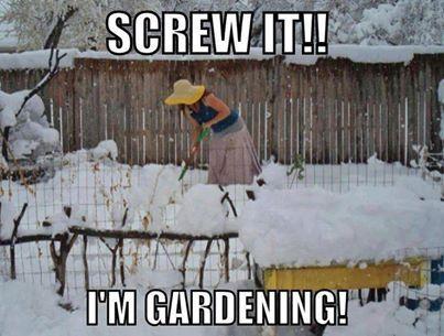 Memes Gardening Gardening Quotes Funny Gardening Humor Winter Garden