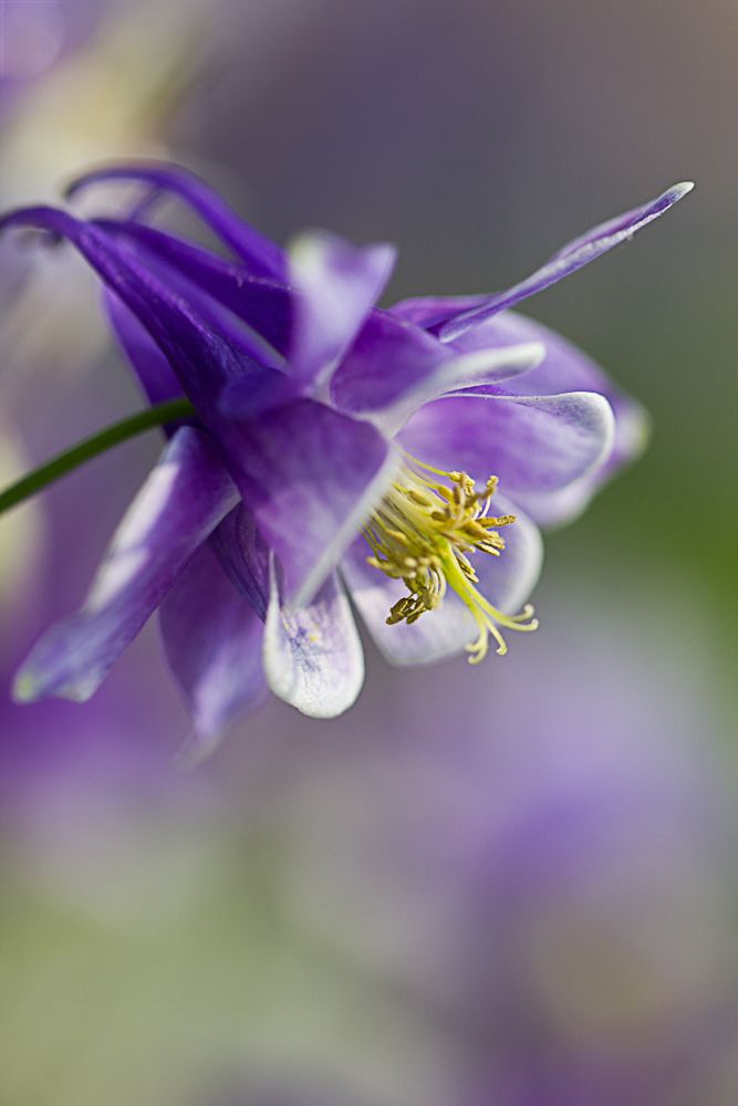 """~~""""Try a little harder to be a little better"""" 