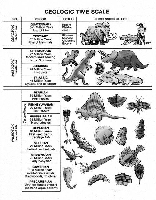 Geologic Time Worksheet Garciniapremiums – Geologic Time Scale Worksheet