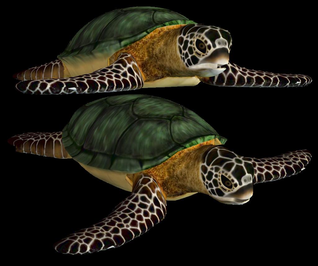 Sea Turtle Png Stock Turtle Sea Turtle Sea Turtle Shell