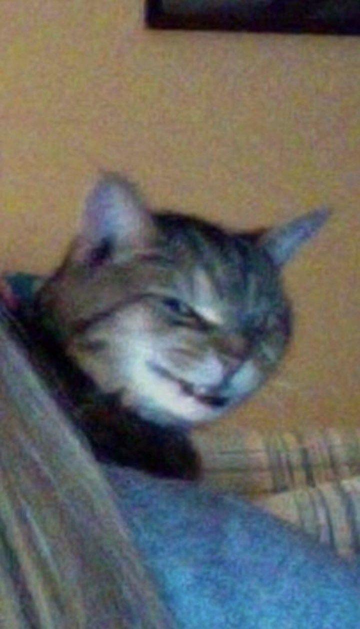 When Cats Put Their Best Derp Face Forward   CutesyPooh - derpy cats