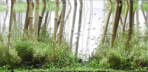 Bamboo Forest | Aquaria Inspiration | Pinterest | Aquariums, Fish Tanks And  Aquarium Landscape