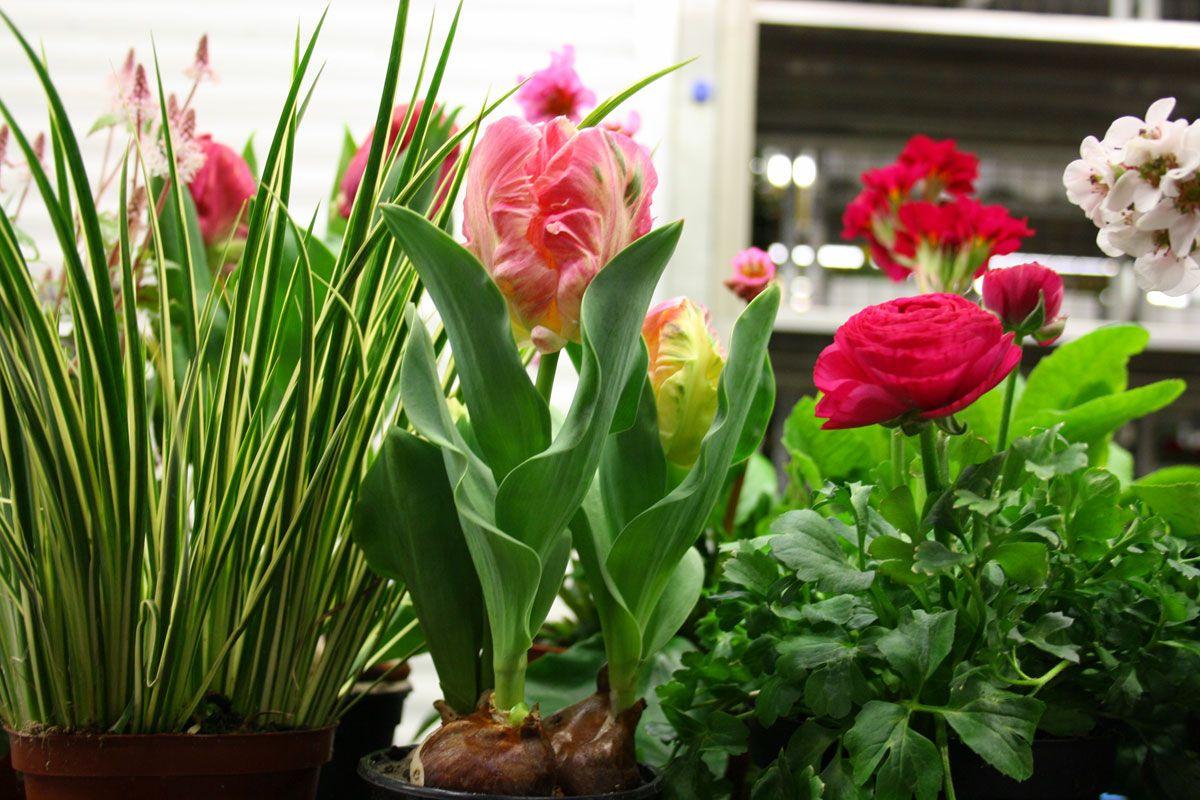 Material für Frühlingsdeko | Blumenladen, Pflanzen, Blumen
