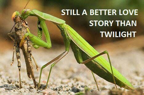 Pin by Charles Rutledge on Still Better... Praying mantis