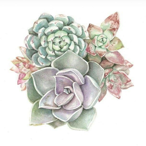 Succulents Original Painting /& Prints Watercolor