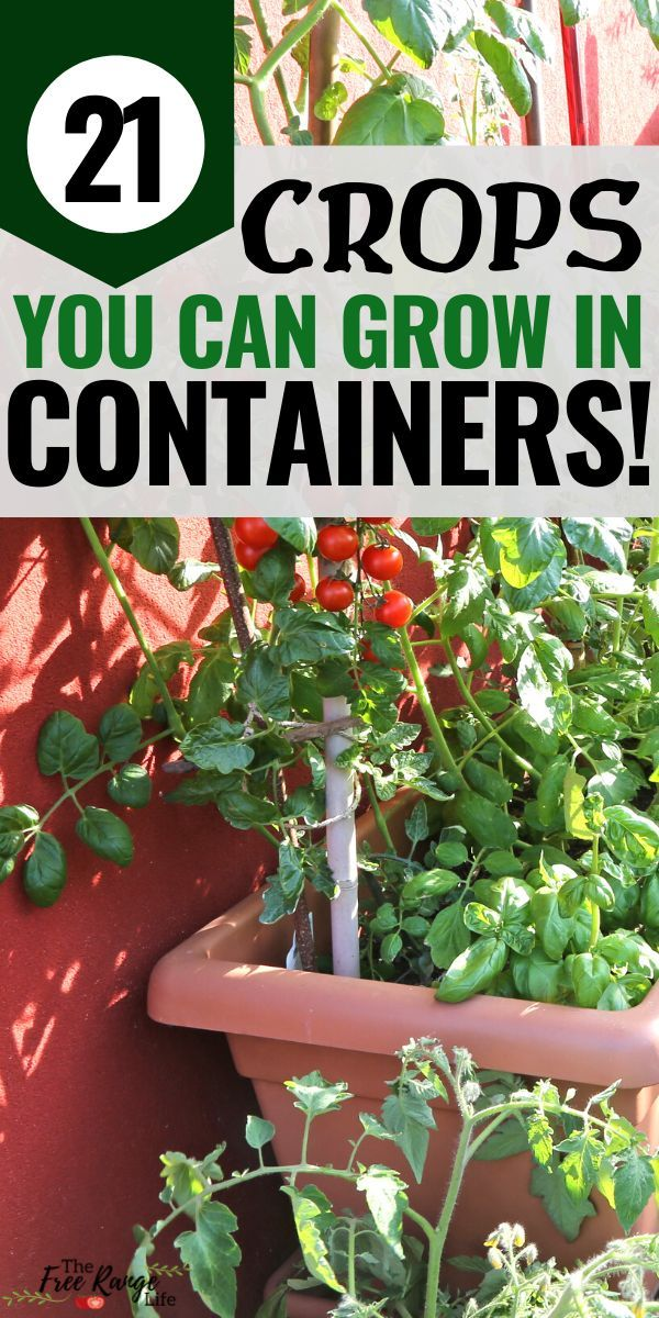 21 Crops You Can Grow in Containers on Your Deck or Balcony!