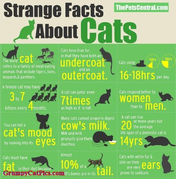Most Interesting Facts >> Really Cool Most Interesting Facts About Cats I Love