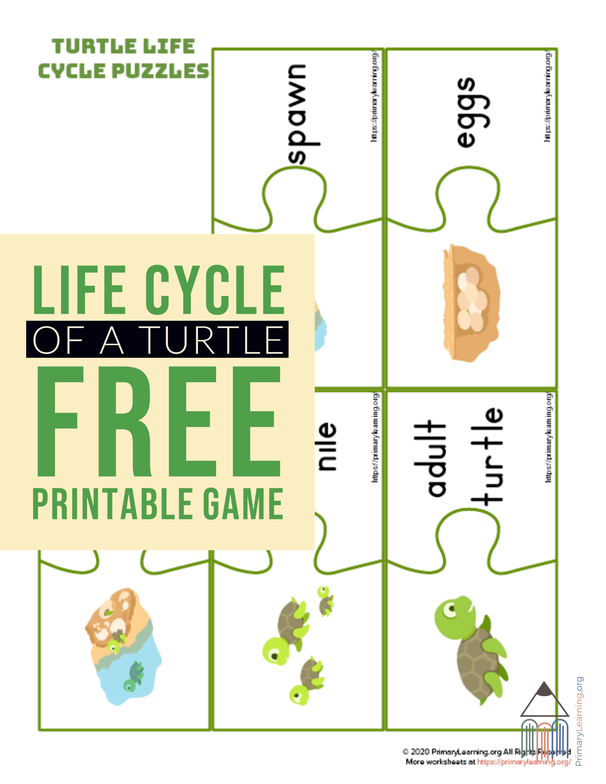 Turtle Life Cycle Puzzles